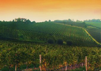Az. vitivinicola Fratelli Facchino